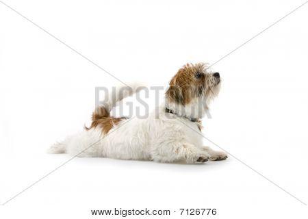 divertido poco mezclado con perro de la raza