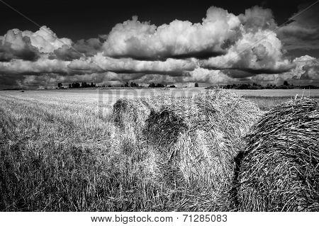 Fall Nature, fields