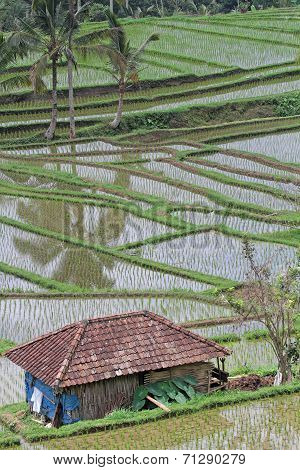 Jatiluwih Ricefields, A World Heritage Site In Bali
