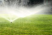 picture of sprinkler  - garden sprinkler on a sunny summer day during watering the green lawn - JPG