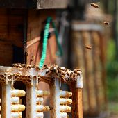 picture of bee keeping  - Beekeepers and hives in a park - JPG