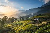 pic of rice  - Rice fields on terraced in sunset at SAPA - JPG