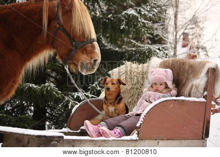 Cute Little Girl Sitting In The Sledges With Puppy And Big Palomino Draught Horse