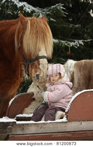 Cute Little Girl Sitting In The Sledges And Big Palomino Draught Horse