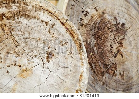 Teak stump background