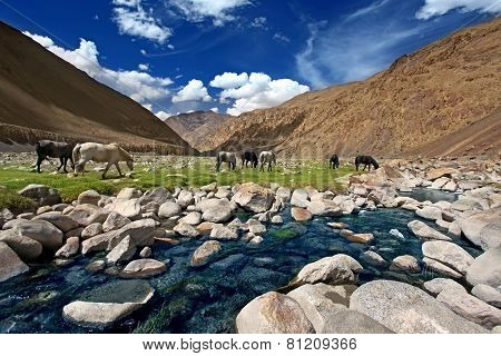 Landscape With Horses Near River In Mountains