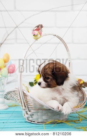 Papillon Puppy In A Basket