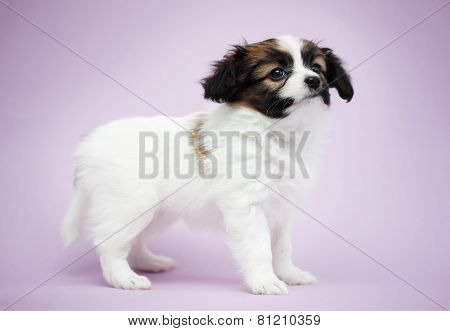 Puppy On A Violet Background