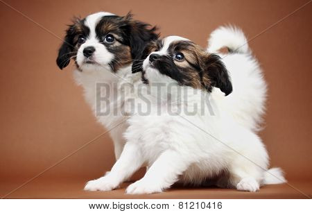 Two Puppy On A Brown