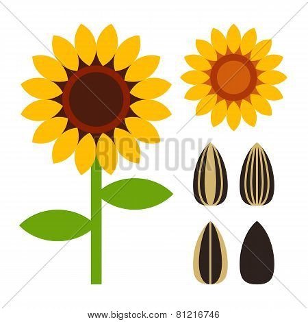 Sunflowers And Seed Symbol