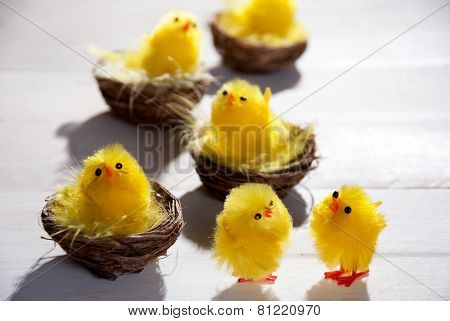 Easter Chicks In Easter Nests And Two Standing Chicks