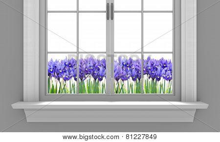 Beautiful spring irises flowering outside a house window