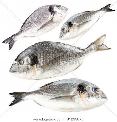 Collage of fresh dorado fish, isolated on white