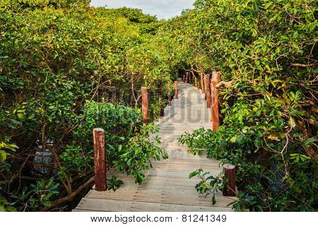 Tropical exotic travel concept - wooden bridge in flooded rain forest jungle of mangrove trees near Kampong Phluk village, Cambodia