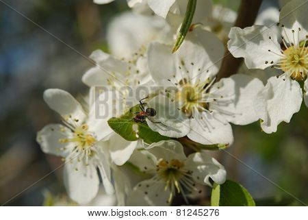 white tree blossom flowers