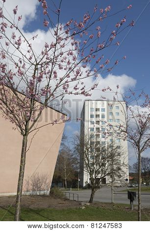 High Rise Residential Architecture, Fifties Church Building And Cherry Blossom.