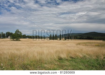 Summer Landscape In A Cloudy Day