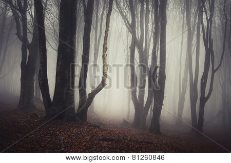 Haunted forest with mysterious fog and twisted trees