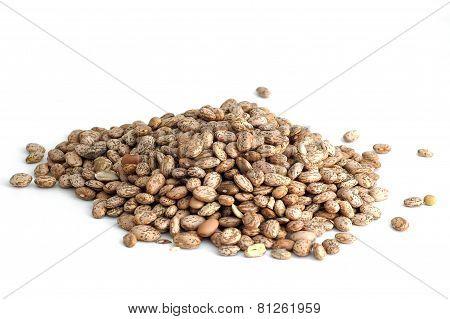 Medley Beans