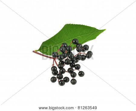Elderberries with leaf