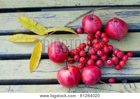 Apples, Fruits Of Mountain Ash