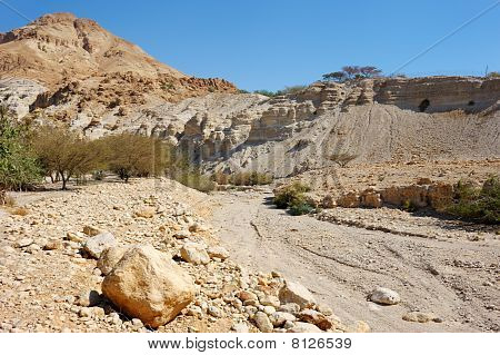 Ein Gedi Nature Reserve Off The Coast Of The Dead Sea