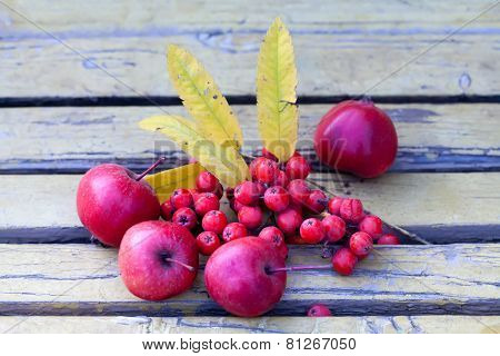 Ashberry, Red Apples On The Bench