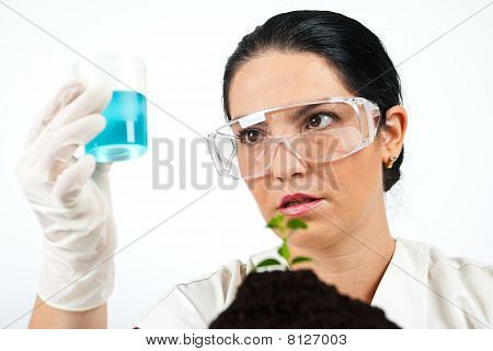 Scientist  Analysing  Or Examine Liquid