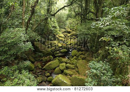 Brazil Rainforest