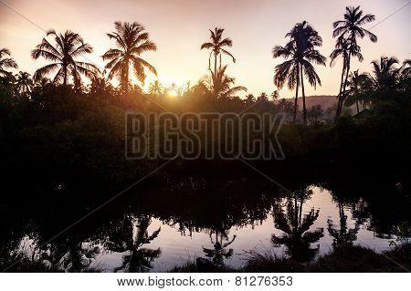 Tropical Village In Goa