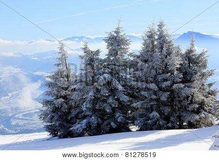 Winter landscape with pines in mountains