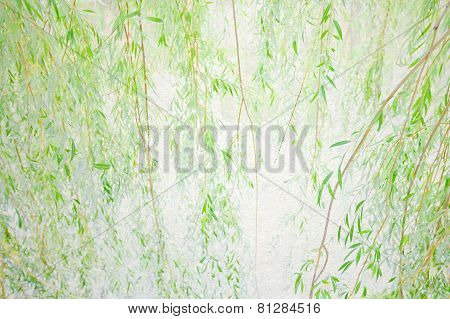 Drooping Willow Branches. Soft Focus. Soft Focus. Vintage Paper Background. Effect Of Watercolor Pap