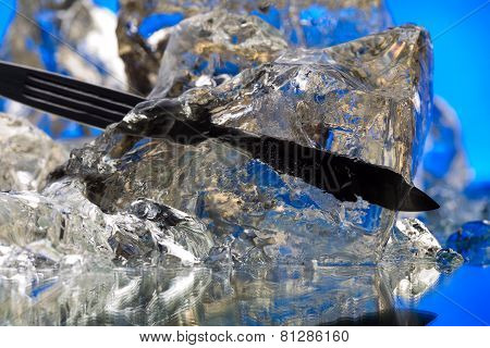 Dental Loon In Ice Block