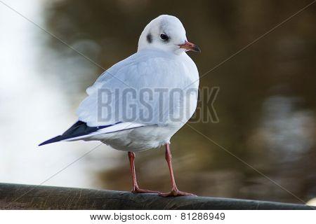 Bird ae