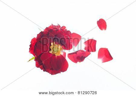 Shattered Flower
