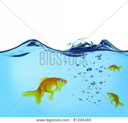 Goldfishes in water