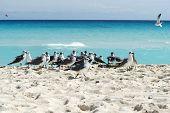 pic of yucatan  - Seagull on the Cancun beach - JPG
