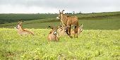 image of plateau  - Herd of Roan Antelope on the Hills of Nyika Plateau - JPG