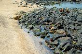 image of sea lion  - sea lions resting on rocks in san cristobal galapagos islands ecuador - JPG