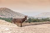 foto of wild donkey  - Brown donkey at field at summer - JPG