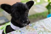 pic of dog clothes  - mongrel black dog wearing green cloth sitting beside the table - JPG