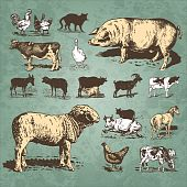 foto of farm animals  - set of antique farm animals engravings - JPG