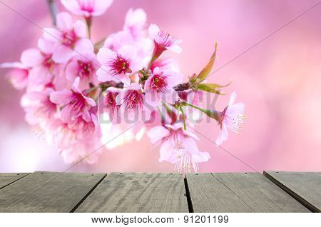 Spring Cherry Blossom Pink Flower For Background Usage