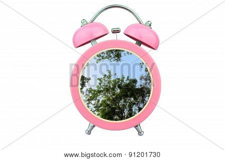 Conceptual Art : Time To Relax : Tree Within Pink Alarm Clock Isolated On White Background