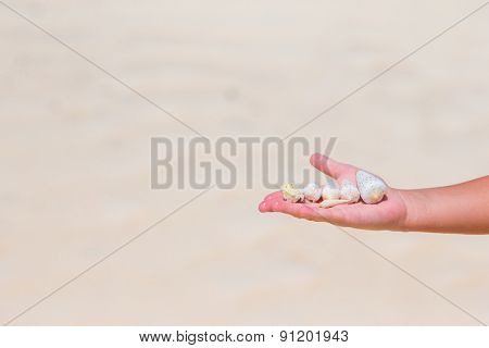 Close up of little girl hand holding beautiful sea shells