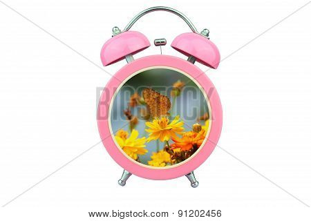 Conceptual Art : Time To Relax : Yellow Cosmos Flower And Butterfly Within Pink Alarm Clock Isolated