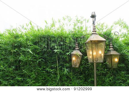 Bamboo Tree Fence And Beautiful Lamp For Background Usage
