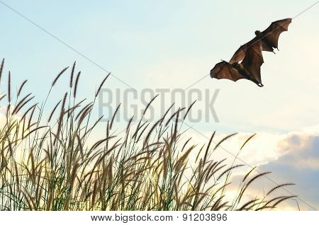 Bats Flying In Spring Season Sky For Background Usage-Halloween