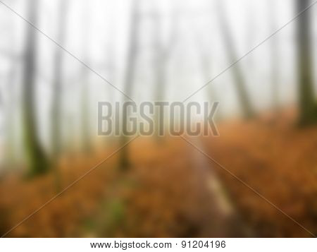 mystery morning in autumn forest, blurred background