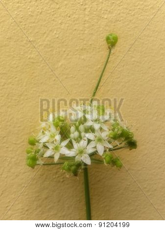 Seed out growing flower
